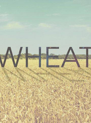 jonathan-hape-wheat